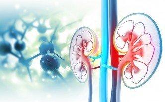 Enfermedades más comunes de los riñones